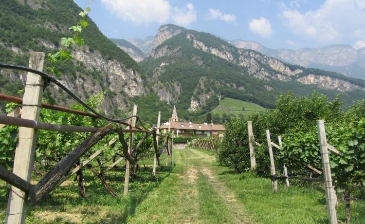 Alois Lageder vineyards